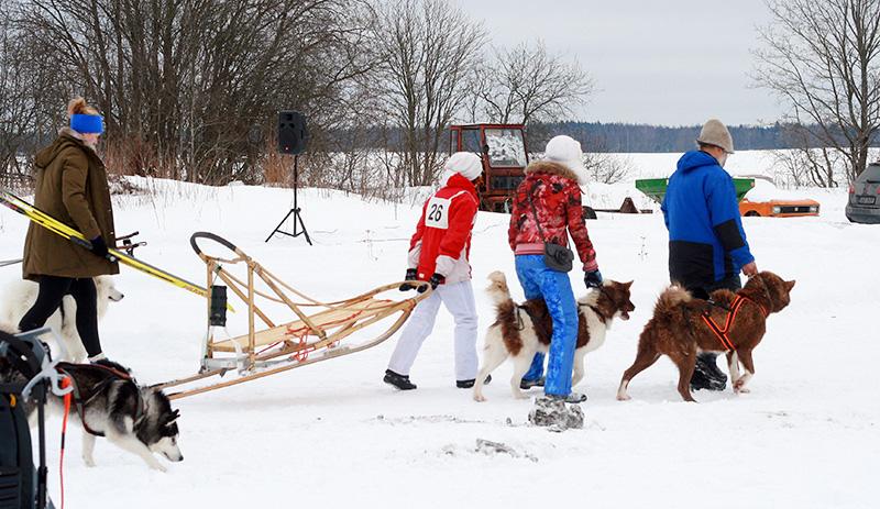 Gröönikoerad starti minemas. Foto by Mariin Kaljula