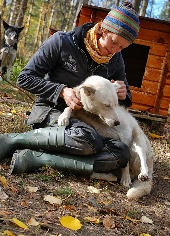 Maret ja alaska husky, Norra 2013a.