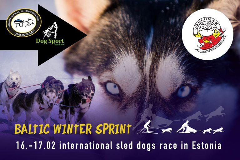 Baltic Winter Sprint 2019 sled dogs race in Estonia