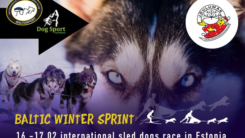 Baltic Winter Sprint 2019 sled dogs race in Estonia